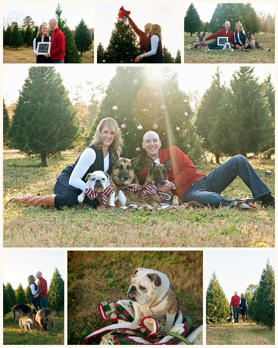 Family Pets at Tree Farm
