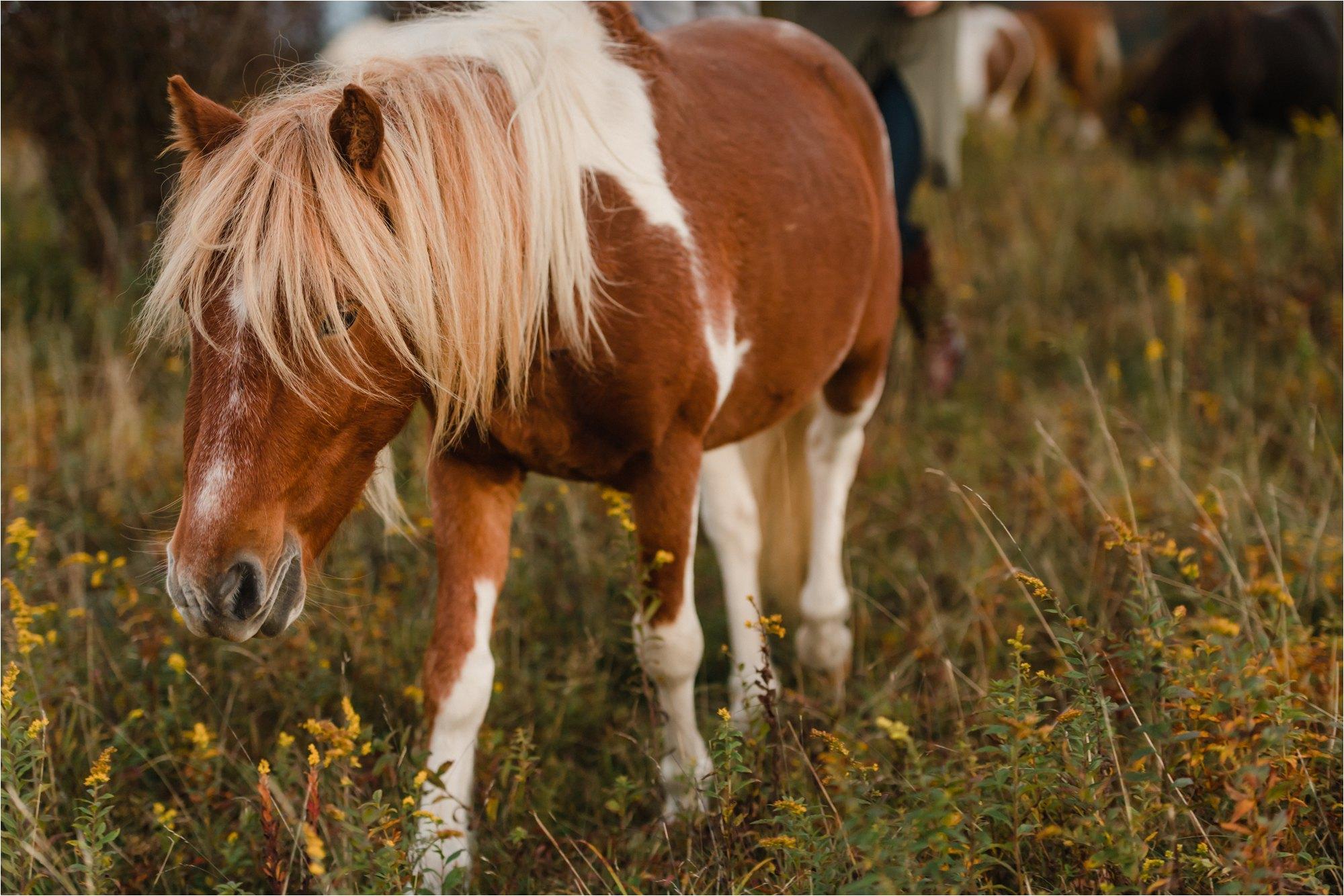 Pony at Blue Ridge Mountains