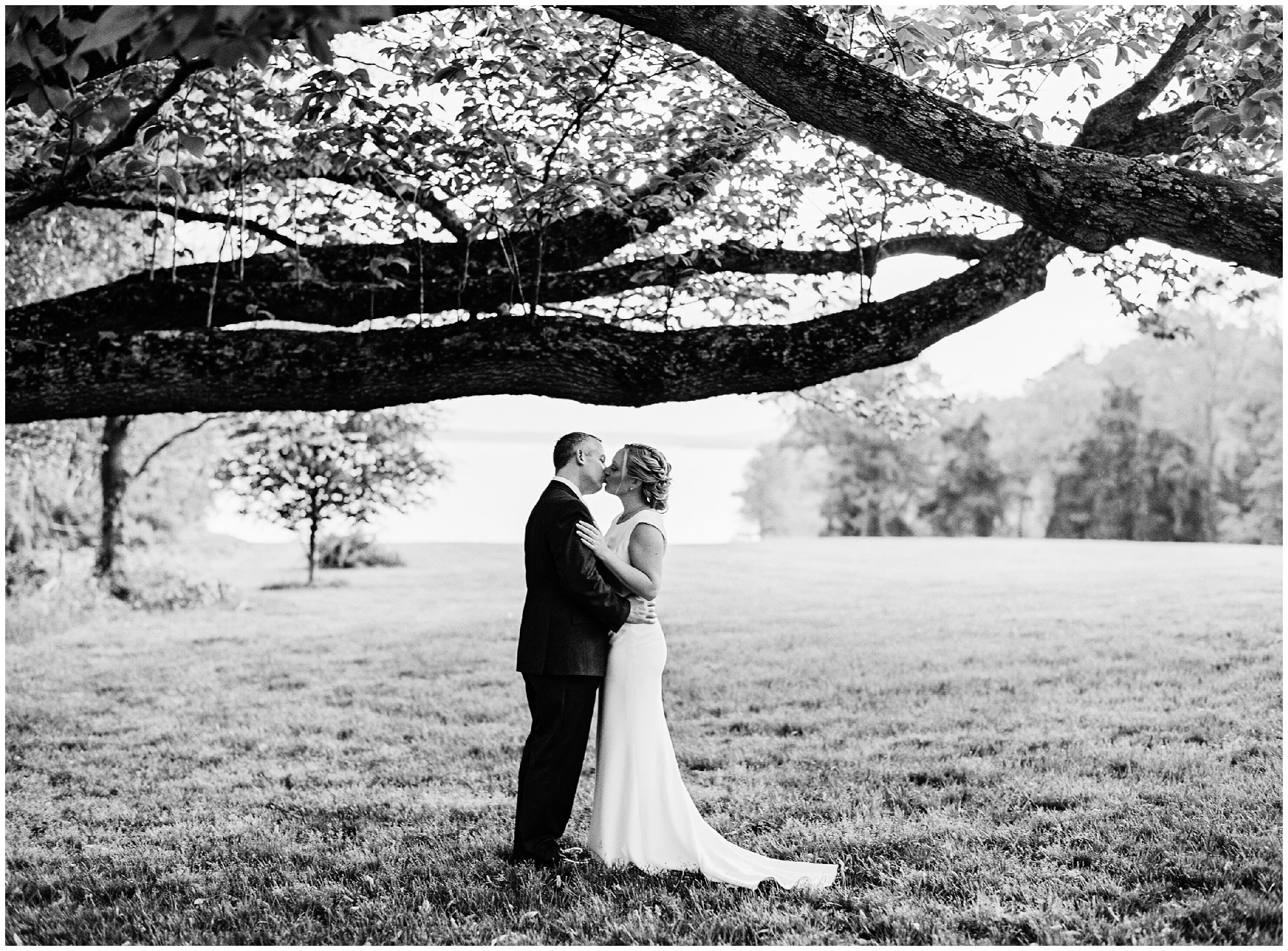 newlyweds kissing under giant tree