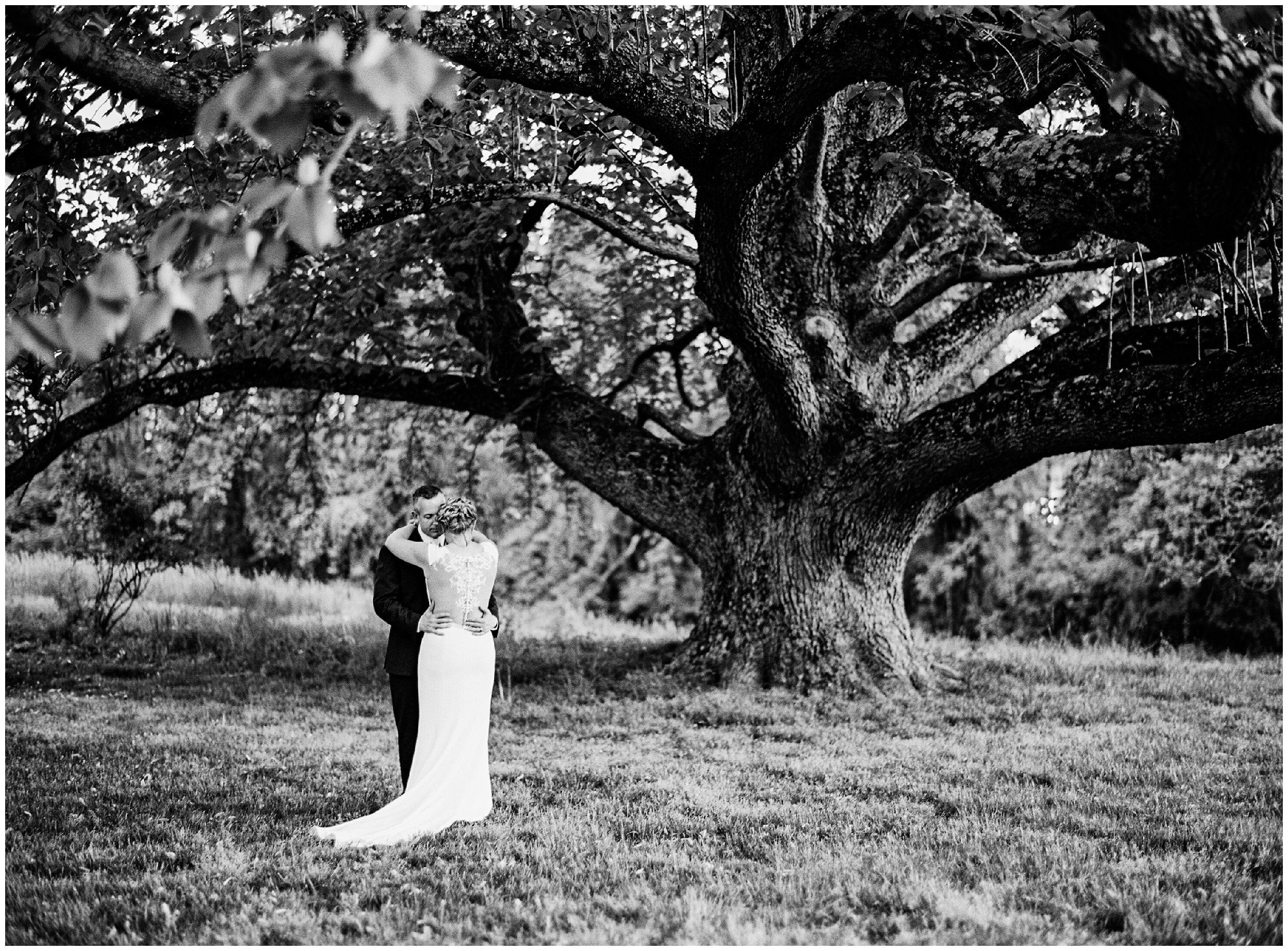 wedding portrait under huge tree