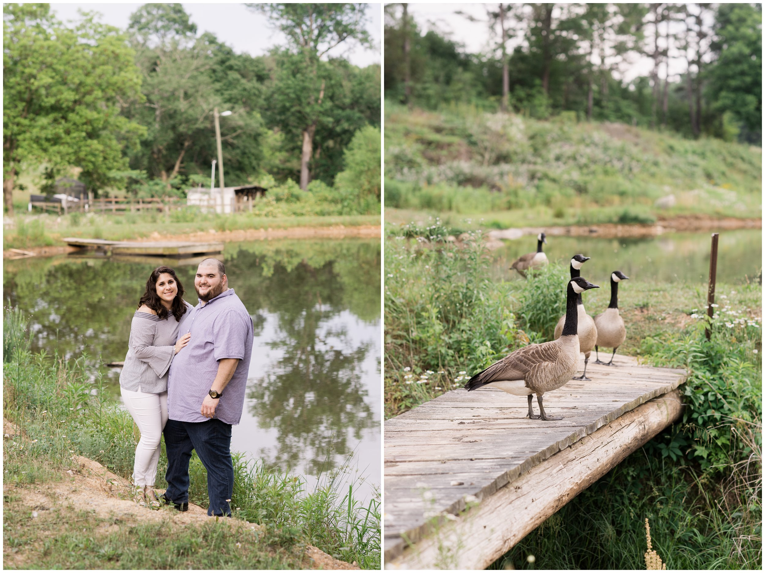 engaged couple on dock with geese
