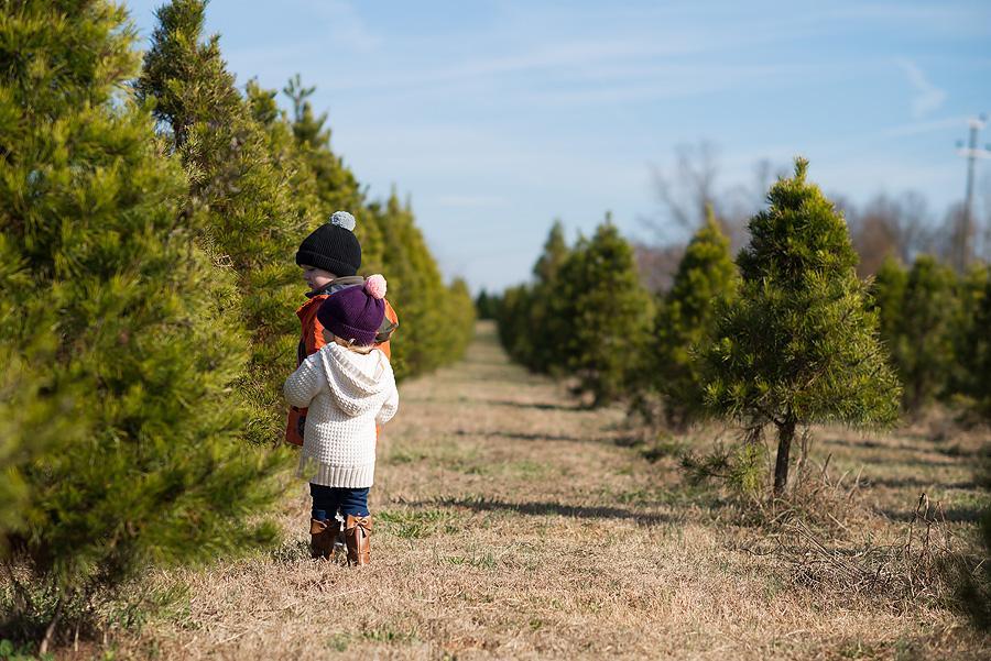 tree farm 2 1web -
