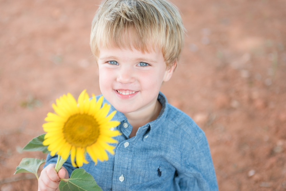 Charlotte sunflower field pictures