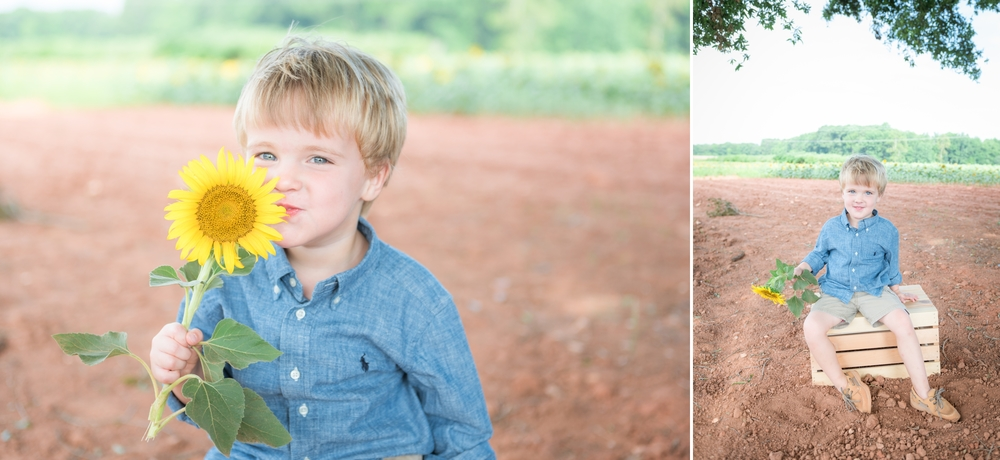 charlotte sunflower field pictures 2 -