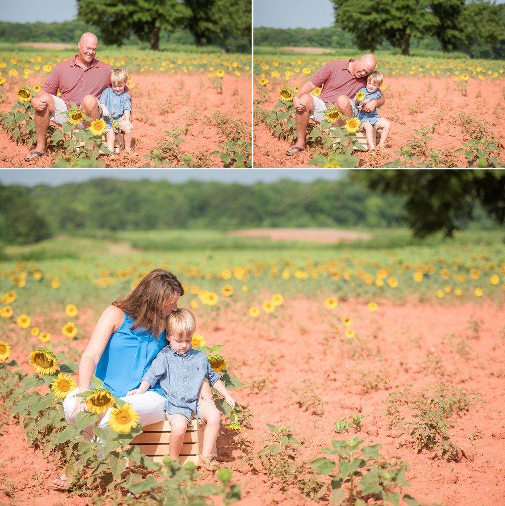 charlotte sunflower field pictures 3 -