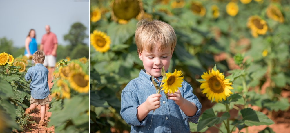 charlotte sunflower field pictures 4 -