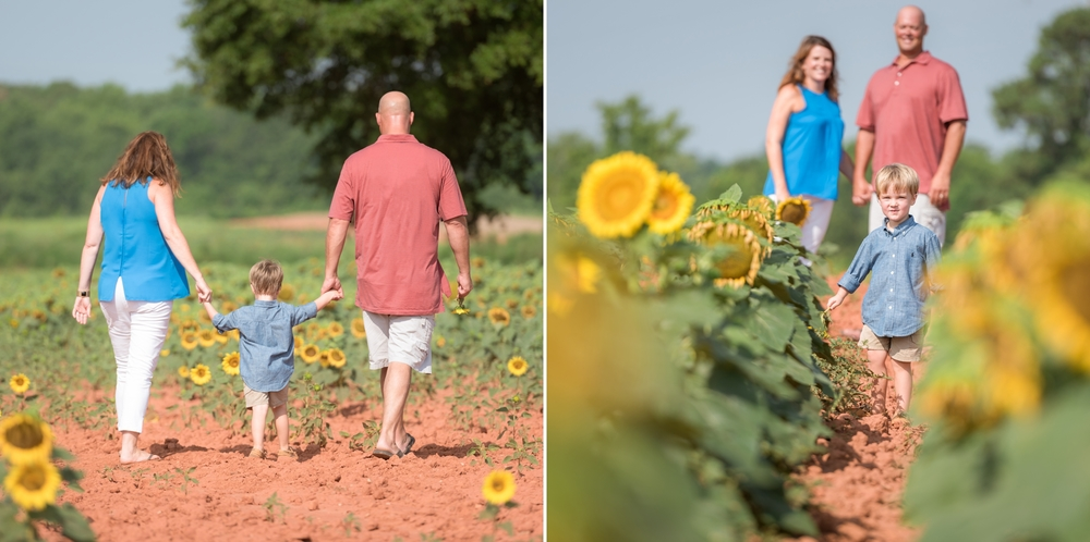 charlotte sunflower field pictures 5 -