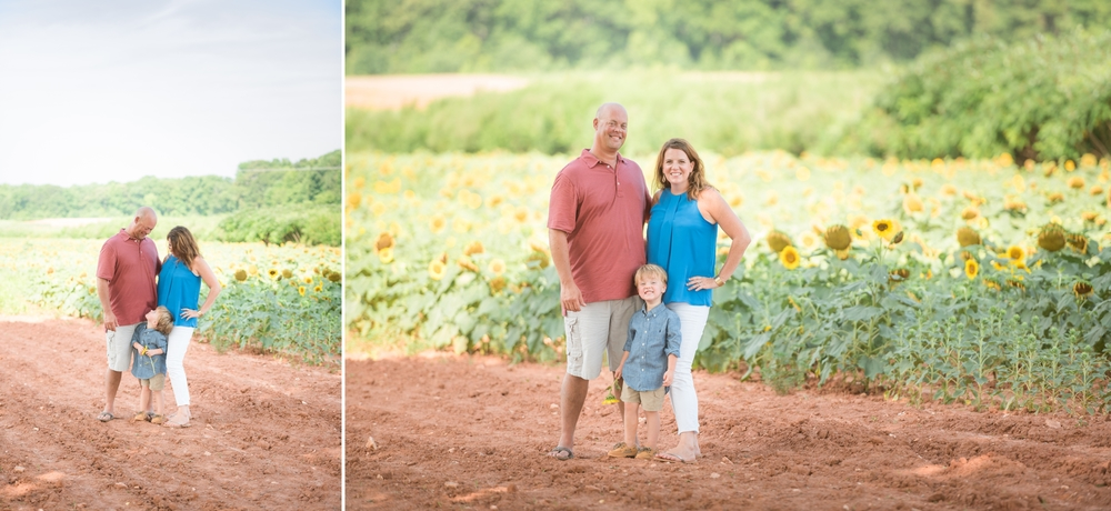 charlotte sunflower field pictures 6 -