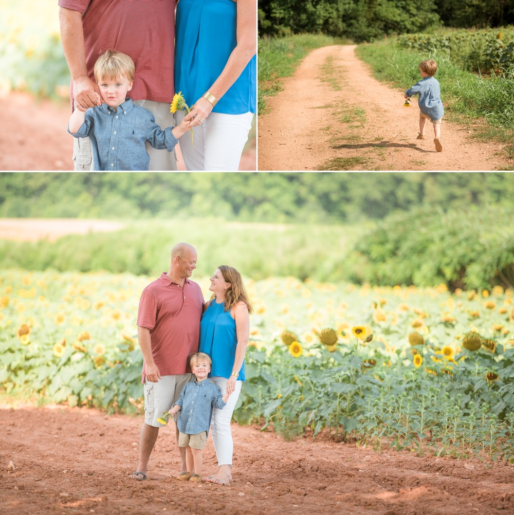 charlotte sunflower field pictures 7 -