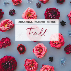 seasonal flower guide