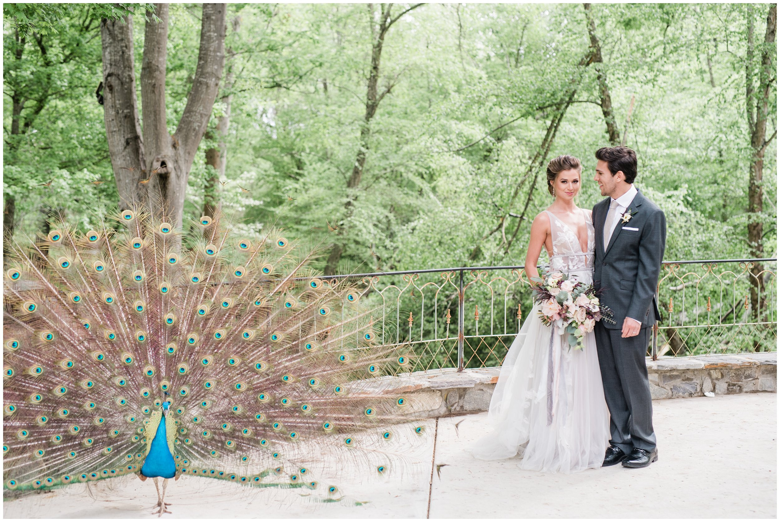 bride and groom with peacock at tipsy goat estate